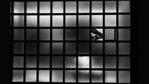 Ventana con vidrio faltando, se ve pedazo de un árbol