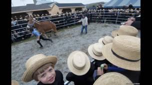 Festival kuda di Peach Bottom, Pennsylvania