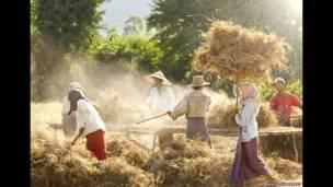 Panen kacang tanah di Myanmar karya Philip Lee Harvey