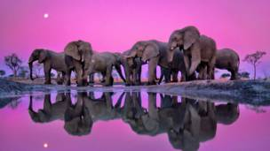 Veja as melhores fotos de natureza do mundo