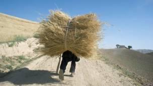 Niño con un lote de trigo en Afganistán