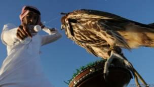 सऊदी अरब के शहर देबा  के पास एक आदमी अपने पालूत बाज़ को गर्मी से बचाने के लिए पानी डालता हुआ.
