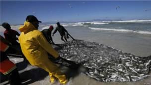 Des pêcheurs avec leurs prises sur Sunrise Beach, au Cap. 12.09.2013 Photo Reuters