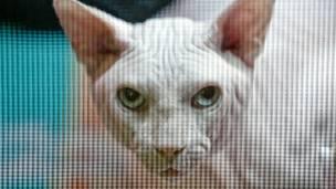 बिल्ली