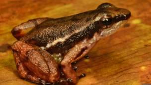 Cientistas acham espécies novas de animais no norte da América do Sul | Foto: Trond Larsen