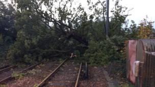 Cây đổ lên đường tàu ở Keymer. Network Rail