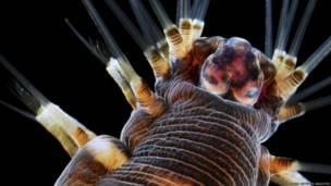 Competição Nikon Small World premia 'a beleza da ciência'.