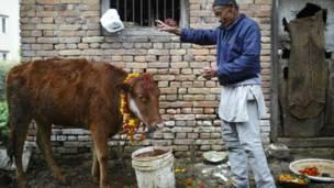 गाई पूजा