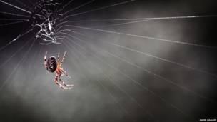 मकड़ी