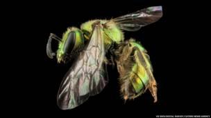 Mundo tem estimadas 20 mil espécies do inseto; laboratório americano monitora várias delas desde 2004