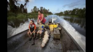Охота на аллигатора, Луизиана, США.