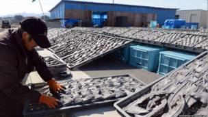 Un trabajador acomoda aletas de tiburón secas en la ciudad de Kesennuma, en el norte de Japón. TOSHIFUMI KITAMURA/AFP