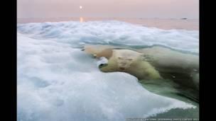 El oso del hielo, por Paul Souders