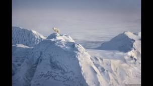 Ice wolf 1986; Jim Brandenburg; Ellesmere Island, Kanada Kodachrome 64