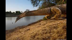 """""""Vanashing monsters"""", 2006. Cocodrilo del Nilo, tomado en el Parque Nacional Zakouma, en Chad"""