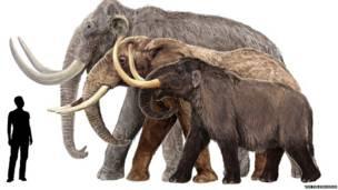 Exposição retrata os mistérios e os hábitos dos enormes animais, que chegaram a conviver com humanos.