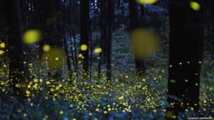 Mostra itinerante traz animais bioluminescentes e fluorescentes e explica os processos químicos que produzem seu brilho.