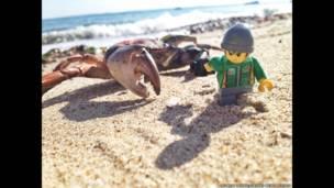En la playa perseguido por un cangrejo. Andrew Whyte/Cater News Agency