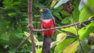 Экспедиция в Эквадор: фото редких видов