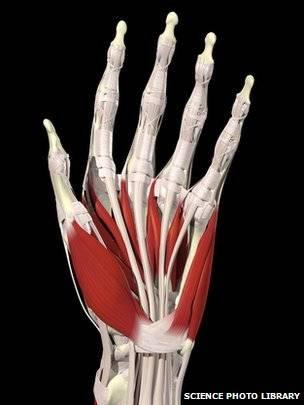 Las increbles extremidades del ser humano manos y pies  BBC Mundo