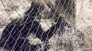 Мавпа в клітці