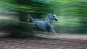 Кінь у галопі