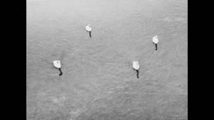 Sem nome (quatro cisnes), 2006, Cortesia do ProjecteSD, de Barcelona