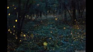Cientos de lucecitas de luciérnaga parpadean en un bosque nipón. Takehito Miyatake