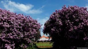 धूप से खिले हुए मौसम में फूल