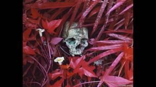 Lirios y restos, Congo oriental, 2012, Richard Mosse