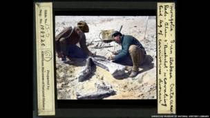 ओल्सेन ओर 'बकशॉट' जो मंगोलिया में हो रही पुरातात्विक खुदाई में मांसाहारी डायनासोर का पिछले पांव निकाल रहे