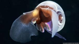 Doze jovens cientistas planejam desbravar mais de 56 mil km dos Oceanos Atlântico, Pacífico e Índico em busca de animais marinhos