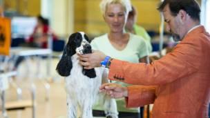 प्रतियोगिता में कुत्तों की सेहत और कुशलता के अलावा उनकी सजधज का भी आकलन किया जाता है और उसी के अनुरूप अंक दिए जाते हैं.