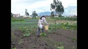 """Foto de un lector de BBC Mundo por el tema """"jardinería"""""""