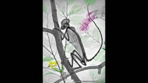Radiografía a color de un mono en un árbol. Arie van't Riet / SPL / Barcroft Media