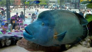 जापान, सोनी, मछली