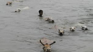 अपने जानवरों के साथ तैरता एक बच्चा.