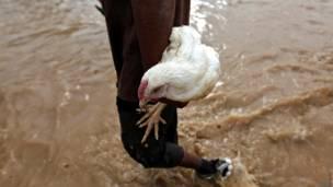 अपने मुर्गे के साथ जाता एक पीड़ित