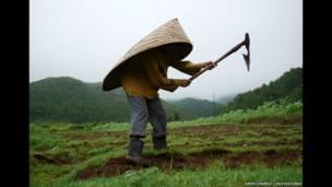 एक किसान खेत में काम करता हुआ, मौसिनराम गांव