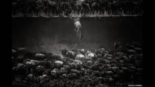 तंजानिया के मारा नदी के किनारे उछलते जंगली जानवर