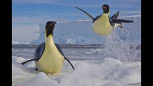 """Пингвинлар"". Пол Никлен"