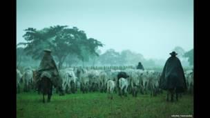 Homens conduzem gado em planície, © Uruma Takezawa
