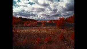 """""""Красный лес"""": зона отчуждения, 2012"""