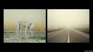 एक कुत्ते और सड़क की तस्वीर