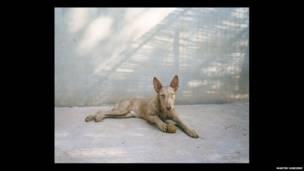 पोडेन्को कुत्ता