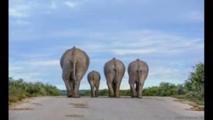 Premiação da Zoological Society of London mostra beleza do mundo animal e alerta para ameaça de extinção de espécies. | Foto: Cathy Withers-Clarke