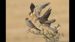 Promovido pelo Museu de História Natural de Londres, no Reino Unido,  'Fotógrafo de Natureza Selvagem do Ano' anuncia os ganhadores de 2015 (Amir Ben-Dov)