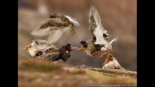 Promovido pelo Museu de História Natural de Londres, no Reino Unido,  'Fotógrafo de Natureza Selvagem do Ano' anuncia os ganhadores de 2015 (Ondrej Pelánek))