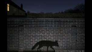 Promovido pelo Museu de História Natural de Londres, no Reino Unido,  'Fotógrafo de Natureza Selvagem do Ano' anuncia os ganhadores de 2015 (Richard Peters)