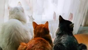 Üç kedi, üç renk, Işık Atmaca